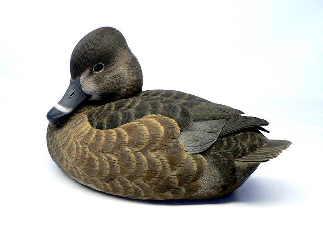 Jason Lucio World Class Duck Decoys Bird Carvings Birds Of Prey